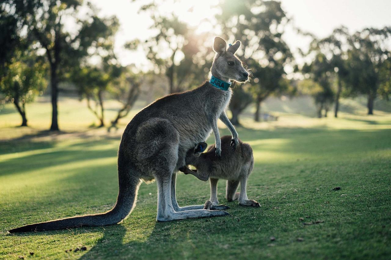 טיול ג'ונגל באוסטרליה