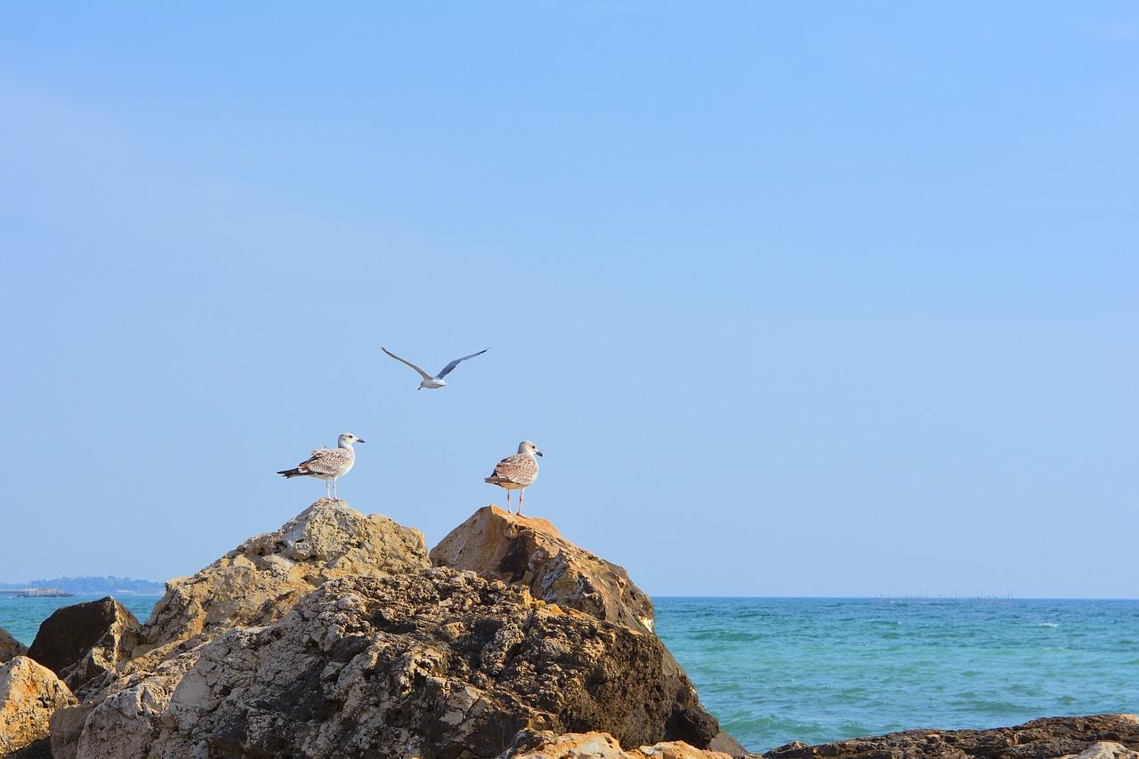 טיול בחופי הים השחור ברומניה